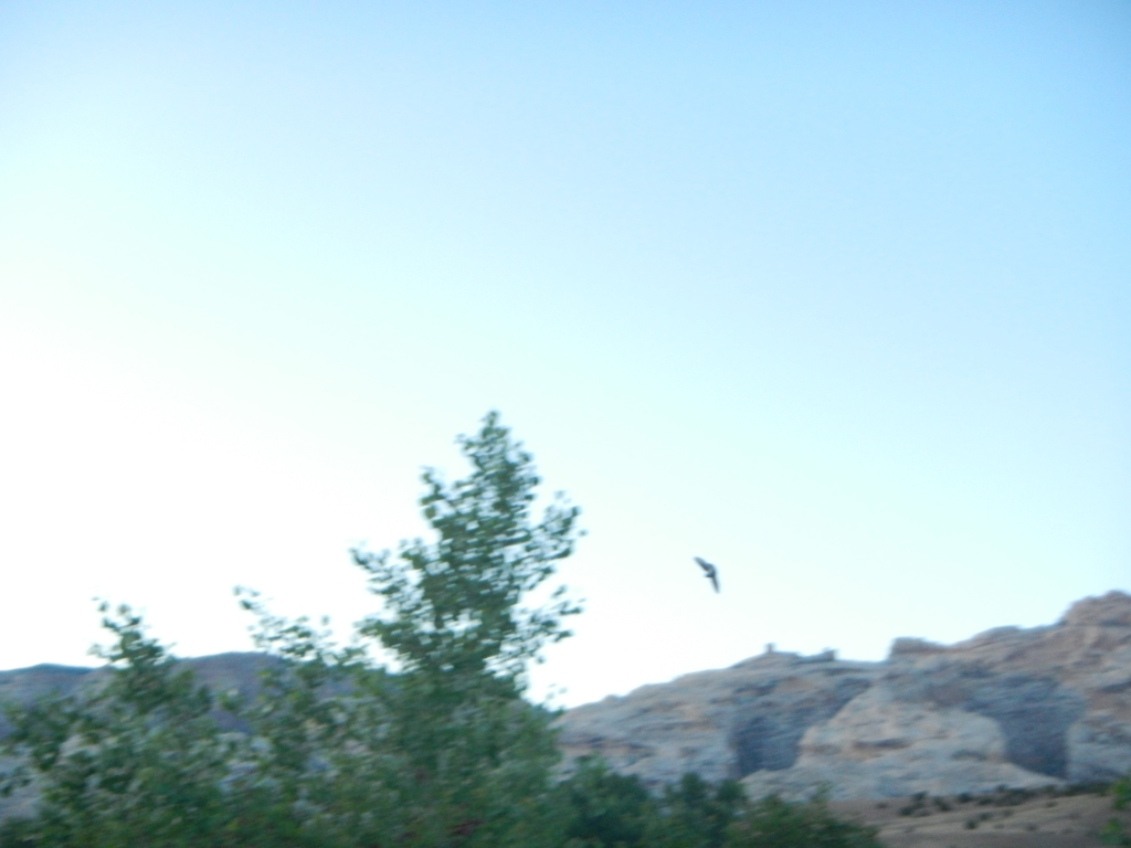 I tried to take swallow pics. They were everywhere. Swooping and diving right through our site