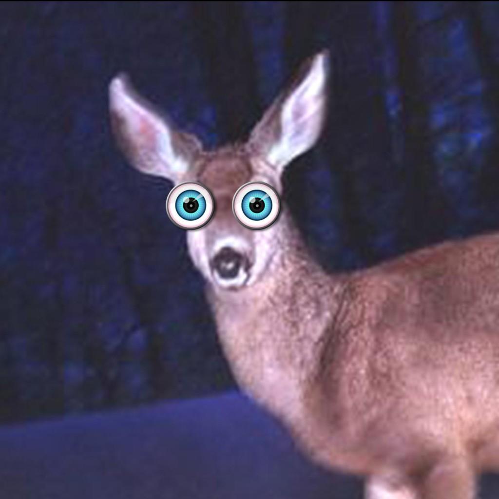 deer-in-headlights-1024x1024