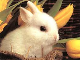 BunBun courtesy of the internet